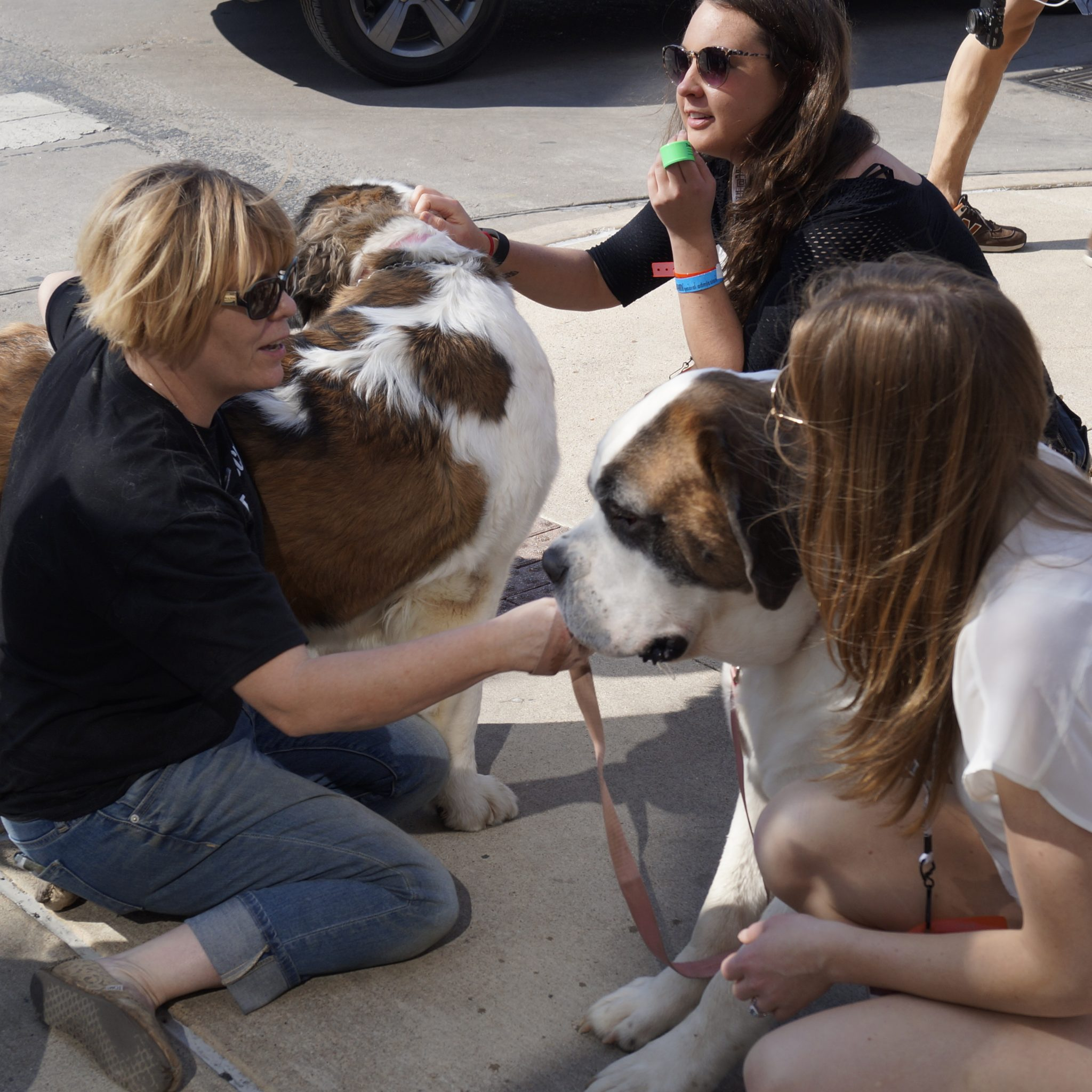Sxsw Mophie Teams Up With St Bernards See more of mophie on facebook. rcr wireless